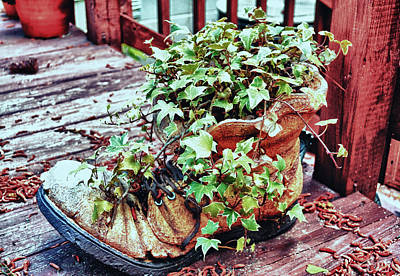 Photograph - Ivy Gets The Boot by Kelly Reber