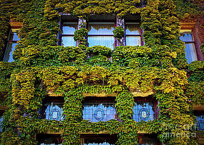 Photograph - Ivy Windows - Digital Art by Carol Groenen