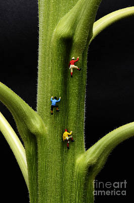 Art For The Bathroom Photograph - Jack And His Friends Climb The Beanstalk by Bob Christopher