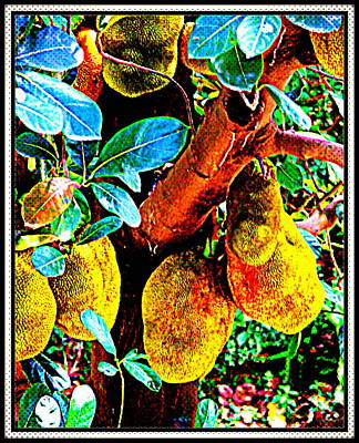 Photograph - Jack Fruit-1 by Anand Swaroop Manchiraju
