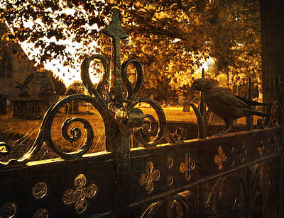 Flying Spider Photograph - Jackdaw On Church Gates by Amanda Elwell