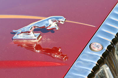 Photograph - Jaguar Hood Ornamen And Emblem by James BO  Insogna