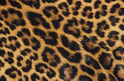 Photograph - Jaguar Panthera Onca Skin by Gerry Ellis