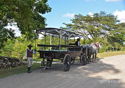 Photograph - Jamaican Horses And Carriage by Carol  Bradley