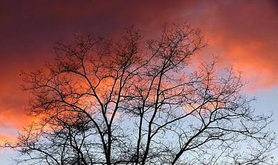 Photograph - January Sunset Silhouette by Will Borden