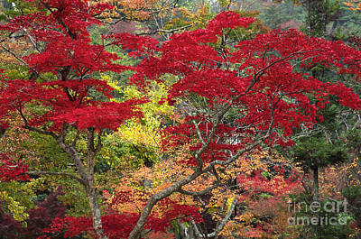 Photograph - Japan-61-5 by Craig Lovell