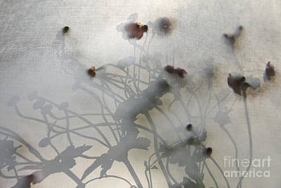 Japanese Anemones With Texture Art Print by Ruby Hummersmith