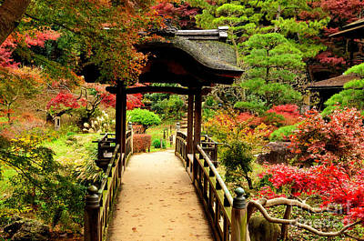 Photograph - Japanese Garden In Autumn 7 by Dean Harte