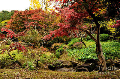 Photograph - Japanese Garden In Autumn 9 by Dean Harte