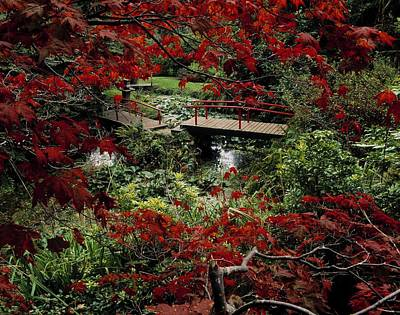 Japanese Garden, Through Acer In Art Print by The Irish Image Collection