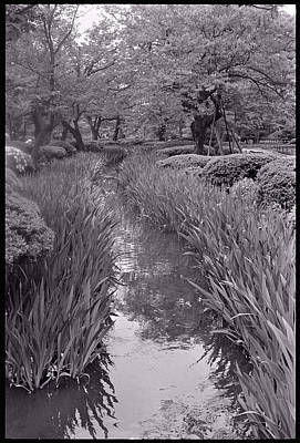 Photograph - Japanese Garden With Irises by Julie VanDore