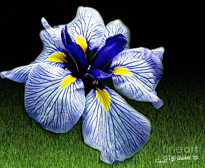 Japanese Iris Ensata - Botanical Wall Art Art Print