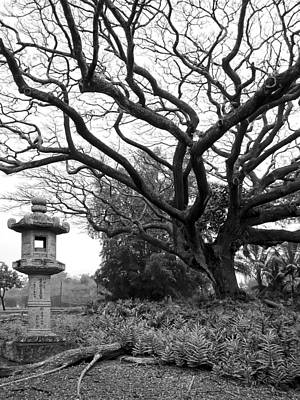 Gnarly Photograph - Japanese Lantern And Tree - Liliuokalani Park - Hilo Hawaii by Daniel Hagerman