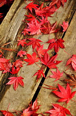 Autumn Photograph - Japanese Maple 20 by Tanya  Searcy