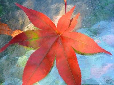Japanese Maple Art Print by Beth Akerman