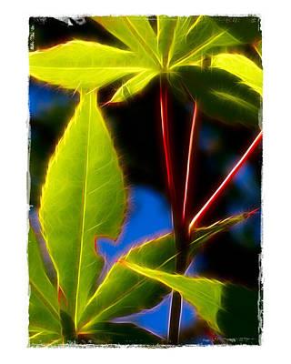 Japanese Maple Leaves Art Print by Judi Bagwell