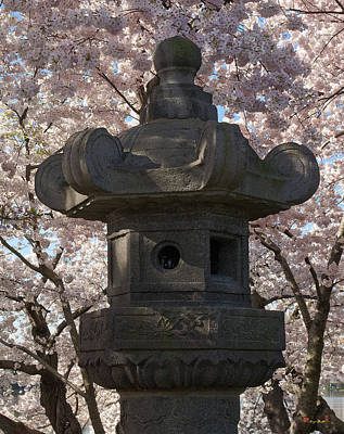 Photograph - Japanese Stone Lantern And Cherry Trees Ds025 by Gerry Gantt