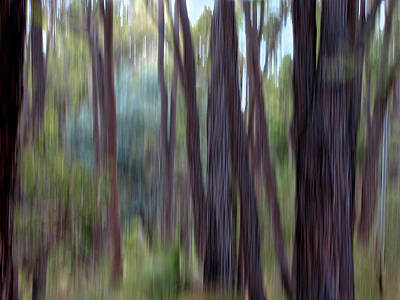 Photograph - Jarrah I by Michelle Wrighton