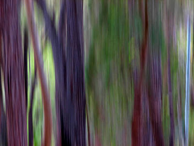 Photograph - Jarrah IIi by Michelle Wrighton