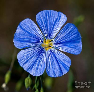Photograph - Jasper - Wild Blue Flax by Terry Elniski
