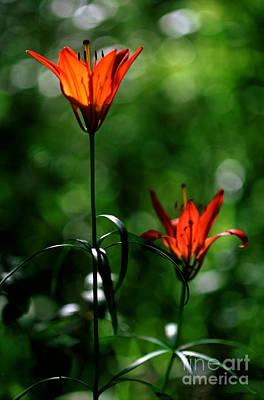Photograph - Jasper - Wood Lily 2 by Terry Elniski