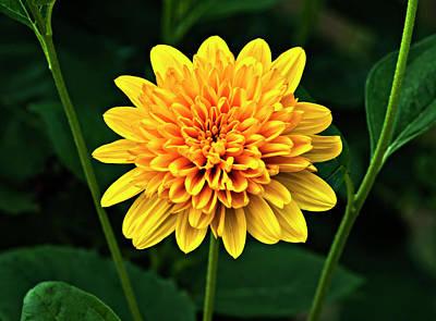 Flower Photograph - Jaunty by Steve Harrington