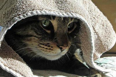 Photograph - Jedi Jack  0102 by Guy Whiteley