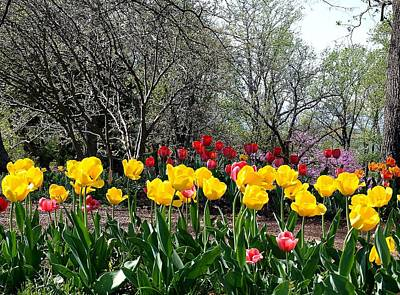 Photograph - Jefferson's Tulips by Jim Goldseth
