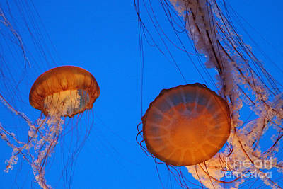 Jellies Print by Tap On Photo