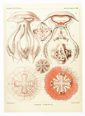 Jelly Fish, Artwork Art Print