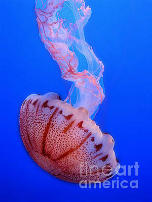 Photograph - Jelly by Morgan Wright