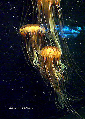 Photograph - Jellyfish by Allan Rothman