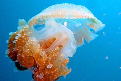 Jellyfish And Small Fish Art Print