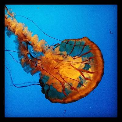 Wine Wall Art - Photograph - Jellyfish by Eric Kent Wine Cellars