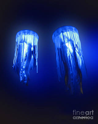 Photograph - Jellyfish In Maui Ocean Center by Joan  Minchak