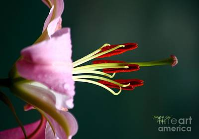 Photograph - Jellyfish Lily by Patrick Witz