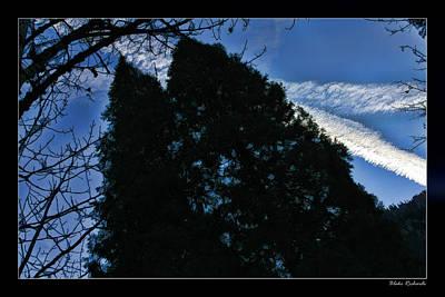 Photograph - Jet Trail Trees by Blake Richards