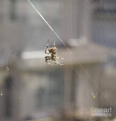 Photograph - Jewel Spider Small Version by Donna Munro
