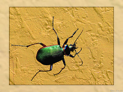 Art Print featuring the photograph Jeweltone Beetle by Debbie Portwood