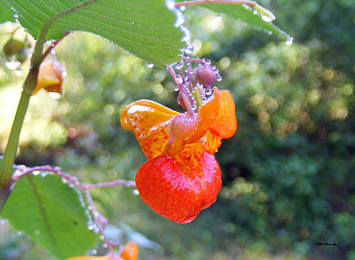 Photograph - Jewelweed Flower by Duane McCullough