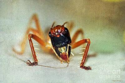 Cricket Photograph - Jiminy Cricket 2 by Kaye Menner