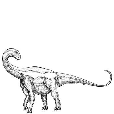 Jobaria - Dinosaur Art Print by Karl Addison