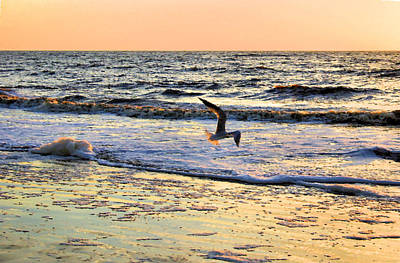 Flying Seagull Digital Art - Jonathan Livingston Seagull by Kristin Elmquist