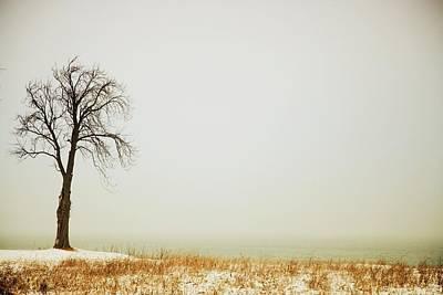 Jordan, Ontario, Canada A Tree Along Print by Pete Stec