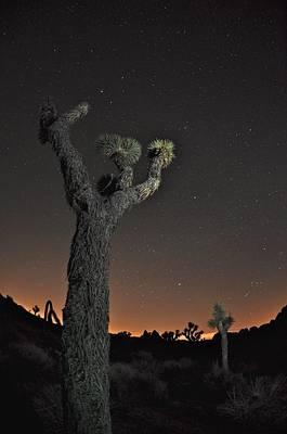 Joshua Night Sky Original