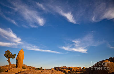 Photograph - Joshua Tree Before Sunset by Olivier Steiner