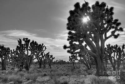 Joshua Tree National Preserve Art Print by Eddie Yerkish