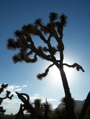 Photograph - Joshua Tree by Peter Mooyman