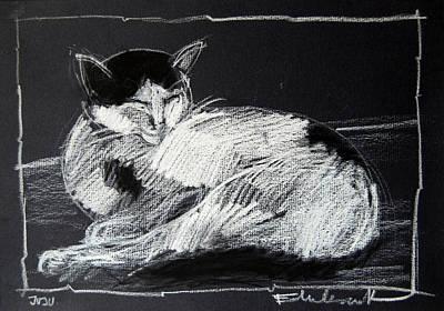 Drawing - Joujou 2 by Mona Edulesco