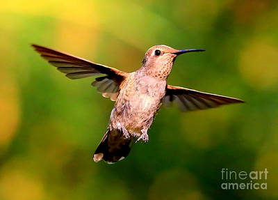 Photograph - Joyful Hummingbird by Carol Groenen